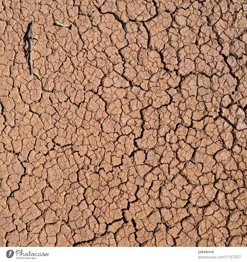 Dürre Erde Wüste trocken Skelett Vertisol Farbfoto Außenaufnahme Menschenleer Textfreiraum links Textfreiraum rechts Textfreiraum oben Textfreiraum unten