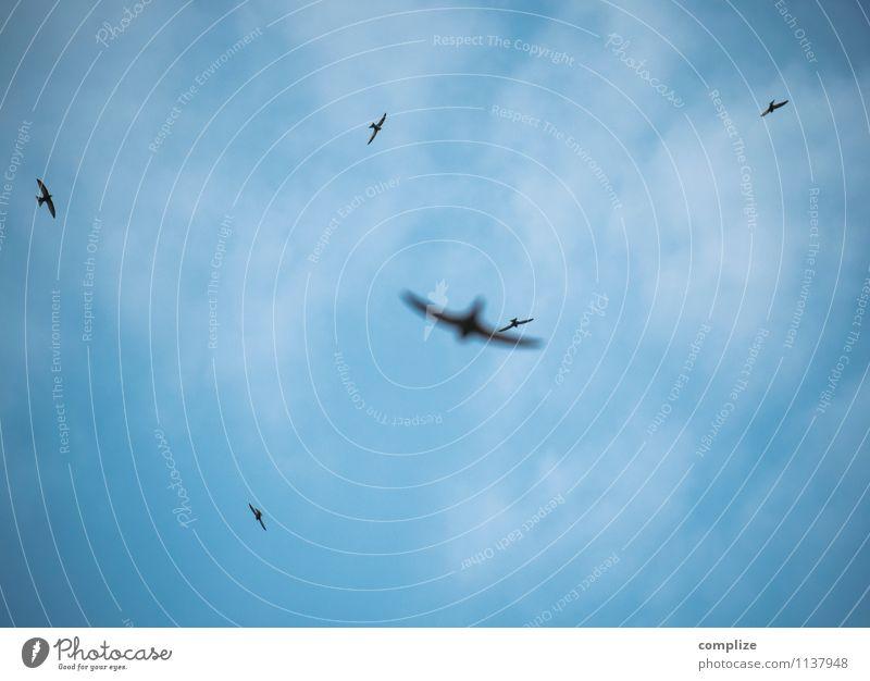 Keine Macht den Schwalben im Sommer Natur Himmel (Jenseits) Wolken Umwelt Frühling Vogel Zufriedenheit Luft Fliege Klima Schönes Wetter Urelemente Ziel