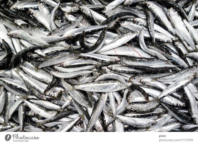 Fisch. Fisch. Fisch. Natur Ferien & Urlaub & Reisen Sommer Meer Tier Umwelt Essen Lebensmittel Tourismus Wildtier Ernährung Restaurant Sommerurlaub nachhaltig