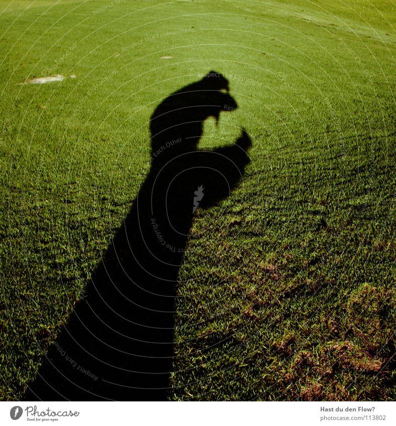 Seht selbst! Wiese Gras grün Hügel Traumwelt Traumland Golfplatz Feindschaft verfolgen Winter Dezember saftig schön kalt Schal Monster Krallen böse gefährlich
