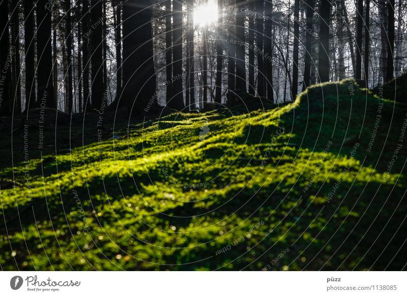 Ohne Moos nix los Umwelt Natur Landschaft Pflanze Erde Sonne Sonnenlicht Baum Wald Holz dunkel natürlich wild grün schwarz Traurigkeit Trauer Einsamkeit