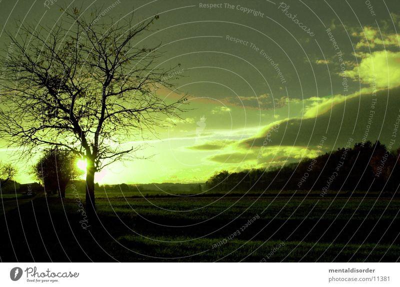 Landschaft in grün Natur Himmel Baum Pflanze Wolken Ferne Wiese Ast Baumstamm links Filter