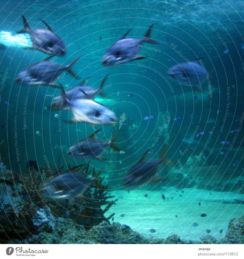Excitement Wasser Fischschwarm Aquarium Meer See Teich Zoo Vielfältig Tier durcheinander rege Zusammensein Kieme Fish water Unterwasseraufnahme blau Bewegung