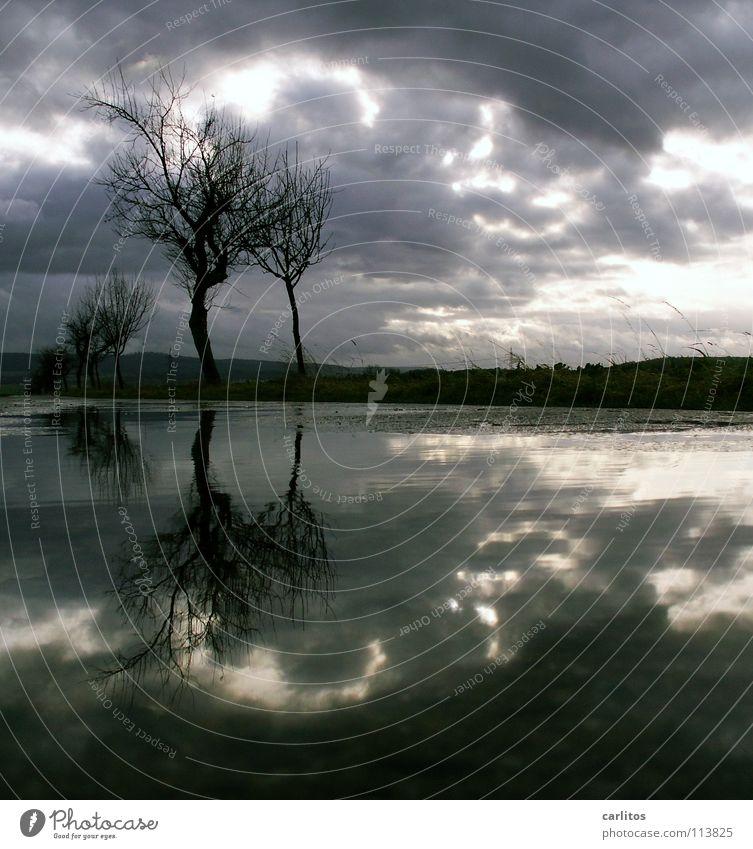 november rain Baum Pfütze Reflexion & Spiegelung Wolken dramatisch Wind Leidenschaft Horizont Mitte Symmetrie Baumstamm November Johanniskraut Trauer