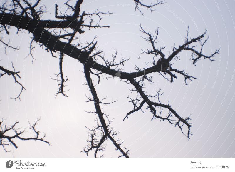 Blitz Himmel Baum Winter Ast Blitze Langeweile Zweig Geäst Dorn Brennholz verzweigt