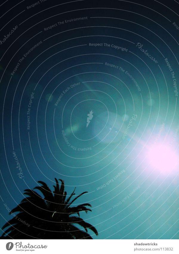 Bossa Nova Palme Baum dunkel Licht Strahlung türkis zyan Ferien & Urlaub & Reisen wegfahren Gomera Brasilien Spanien Südamerika Indien Afrika Himmel Sonne