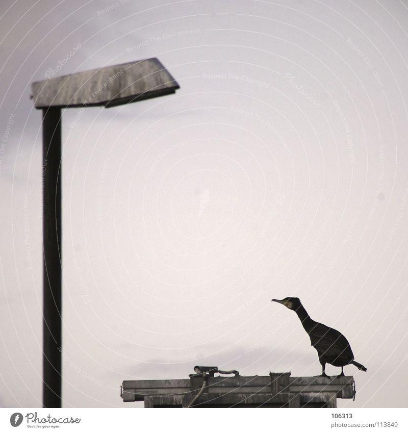 MY FRIEND IS A LAMP Himmel Natur grün Meer Tier Einsamkeit Wolken schwarz Umwelt Tod Leben See Beine träumen Lampe Metall