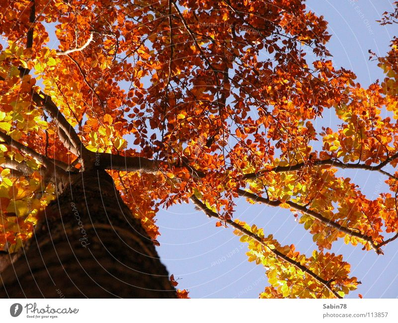 Herbstzeit Baum rot Blatt gelb Jahreszeiten Baumstamm