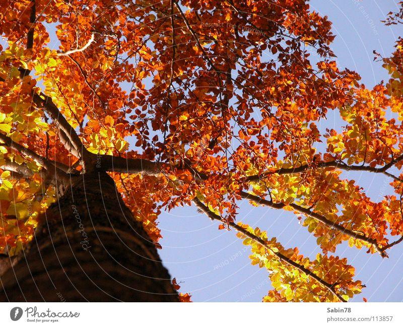 Herbstzeit Baum rot Blatt gelb Herbst Jahreszeiten Baumstamm