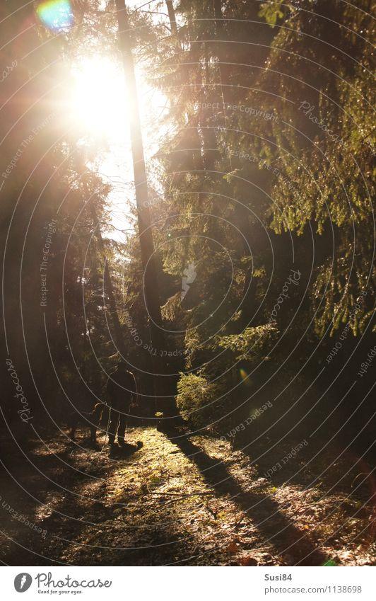 Spaziergang in der Sonne Hund Mensch Natur Jugendliche Pflanze grün Baum Erholung Junger Mann Tier Erwachsene Bewegung Frühling natürlich Wege & Pfade