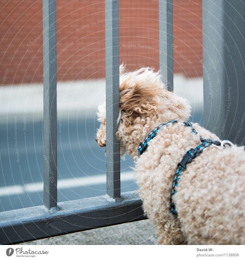 Ohne Zaun ein Alptraum Verkehr Straßenverkehr Tier Haustier Hund Fell Diät beobachten Blick gruselig klein Gefühle Sicherheit Schutz Verantwortung achtsam