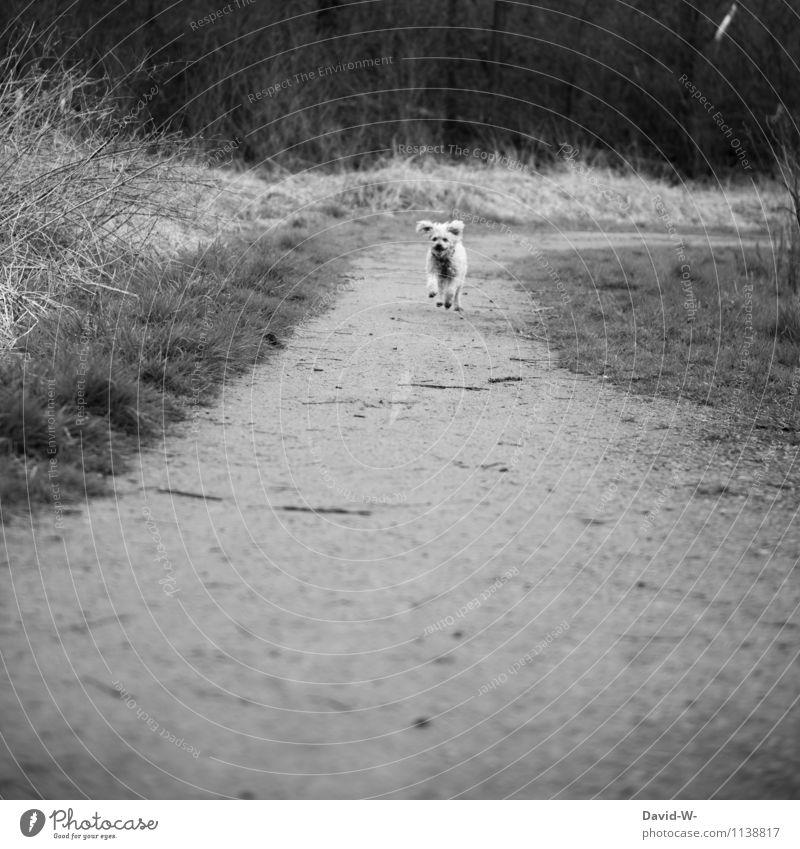 Leckerchen gezückt sportlich Freizeit & Hobby Ferien & Urlaub & Reisen Abenteuer Ferne Freiheit Natur Wiese Wald Tier Haustier Hund Fell Pfote rennen beobachten