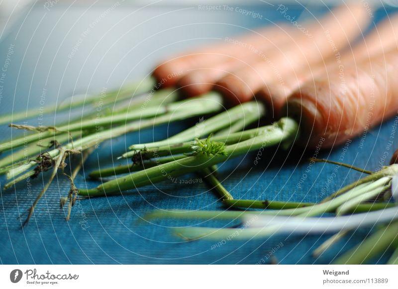 Rübe ab? Natur grün blau Ernährung orange frisch Küche Gemüse Landwirtschaft lecker Ernte Bioprodukte Möhre roh Erntedankfest dreifarbig