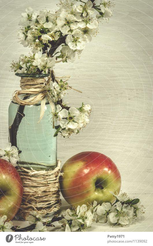 Blütenzweig mit Apfel Frucht Dekoration & Verzierung Stillleben Pflanze Zweig Apfelblüte Glasflasche Vase Blühend Duft retro ästhetisch Nostalgie ruhig
