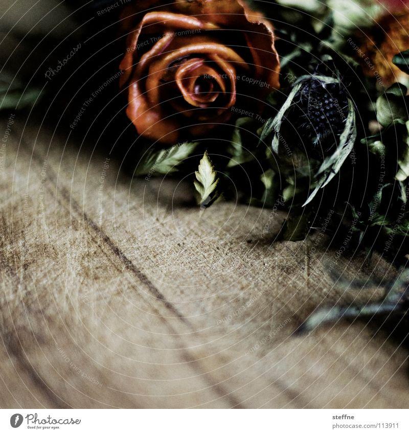 Ein Strauß Blumen blau grün rot Pflanze Blume Freude braun Geburtstag Dekoration & Verzierung Rose trocken Blumenstrauß Holzbrett getrocknet welk Valentinstag