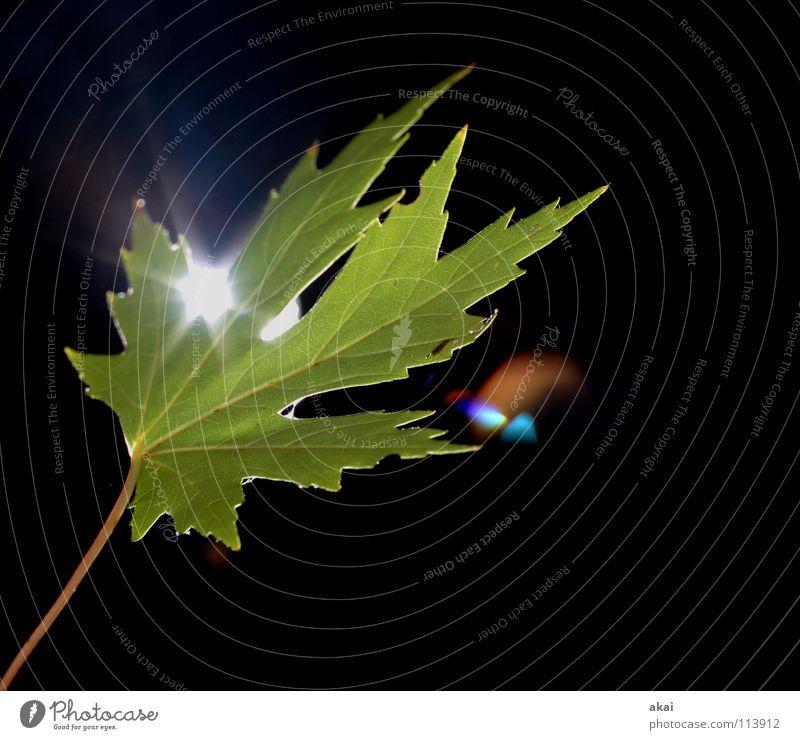Das Blatt 24 Pflanze Urwald Wildnis grün Botanik Pflanzenteile pflanzlich Umwelt Sträucher krumm Gewächshaus Stengel Gegenlicht Makroaufnahme Nahaufnahme akai
