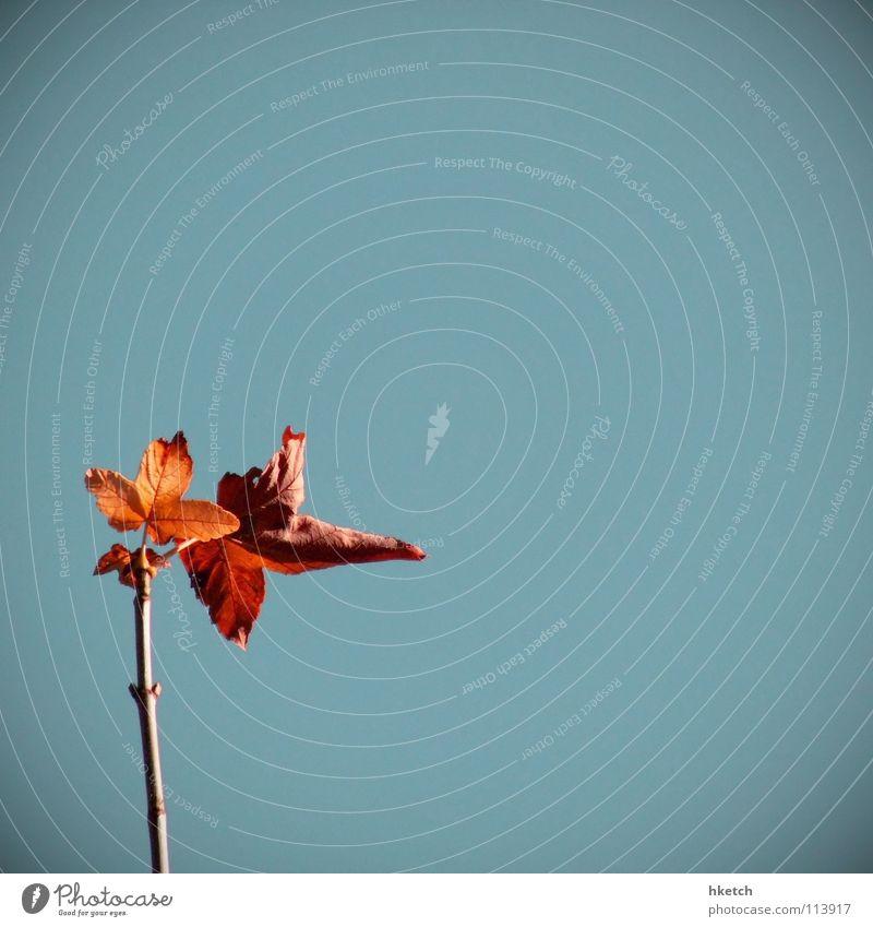 Showdown Herbst mehrfarbig Blatt rot kalt Verzweiflung Abschied Vergänglichkeit fallen mögen Himmel