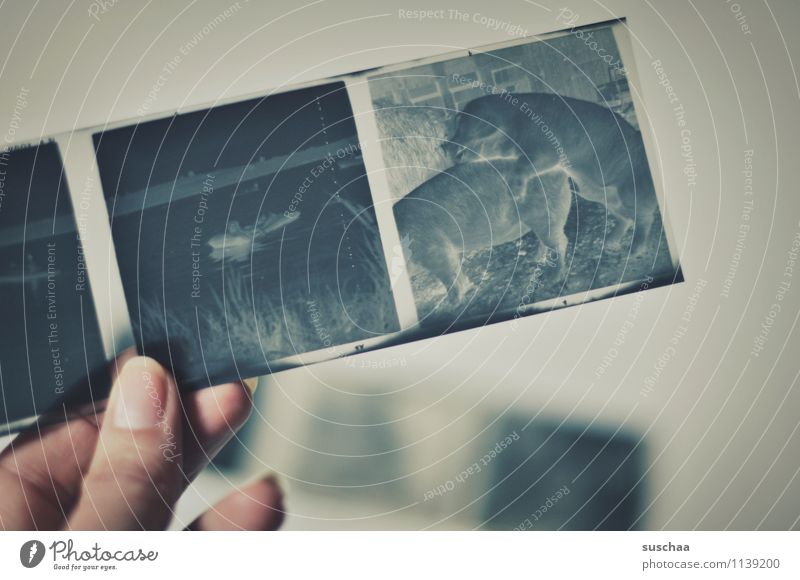 schweinebums negativ analoge Fotografie alt Erinnerung Familienalbum Hand Finger Daumen