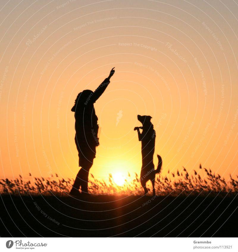 Tanze, Lilli, tanze! Frau rot Strand Gras Hund Freundschaft Küste Abenddämmerung
