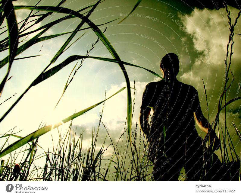 Silhouette hüpfen Frühling Sommer Wiese Gras grün Mann Kerl Stil Sonnenuntergang Körperhaltung Halm Froschperspektive Sonnenstrahlen Wolken Feld Gefühle