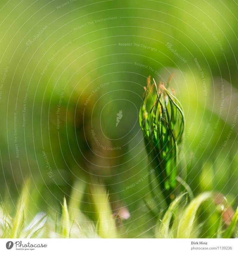 Waldboden III Umwelt Natur klein natürlich grün Umweltschutz Grünpflanze Teppich Moosteppich weich nah frisch träumen streben Erde ästhetisch mystisch