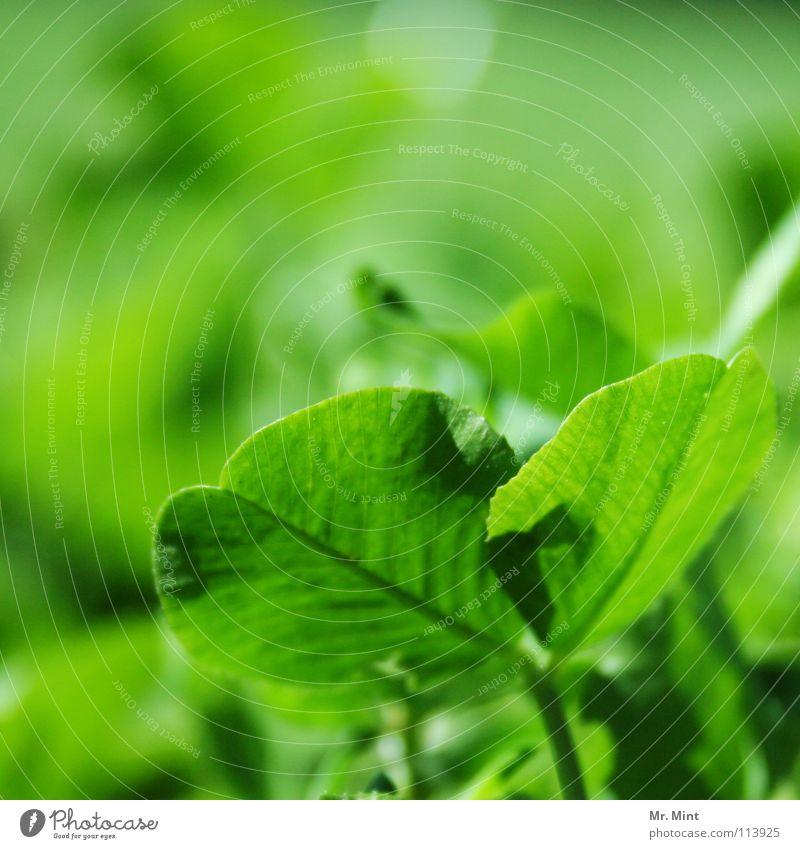 lucky one grün Erholung Wiese Glück Klee Kleeblatt Glücksklee