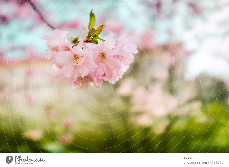 Das war nur ein Moment Himmel Natur grün schön Baum Umwelt Blüte Gefühle Frühling feminin Gesundheit Glück Gesundheitswesen Stimmung rosa Zufriedenheit