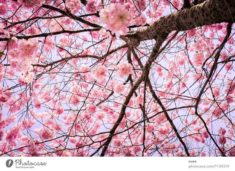 HURRA! Ach nee doch nicht. schön Umwelt Natur Himmel Frühling Schönes Wetter Baum Sträucher Blüte Blühend Wachstum ästhetisch Freundlichkeit rosa Gefühle