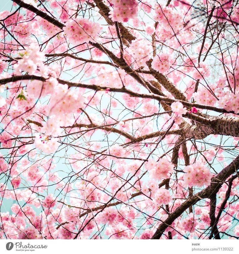 Wieder da! Himmel Natur schön Umwelt Frühling Blüte Gefühle feminin Glück Stimmung rosa Wachstum Sträucher ästhetisch Ast Blühend