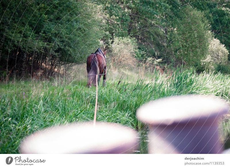 1 PS Freude Erholung Ausflug Dienstleistungsgewerbe Umwelt Gras Kanal Bayern Deutschland Menschenleer Bootsfahrt Tier Pferd gebrauchen beobachten entdecken