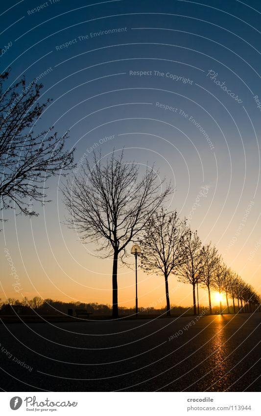 baimsiluetten Himmel Baum Sonne blau Winter Straße Beleuchtung Romantik Asphalt Ast Abenddämmerung