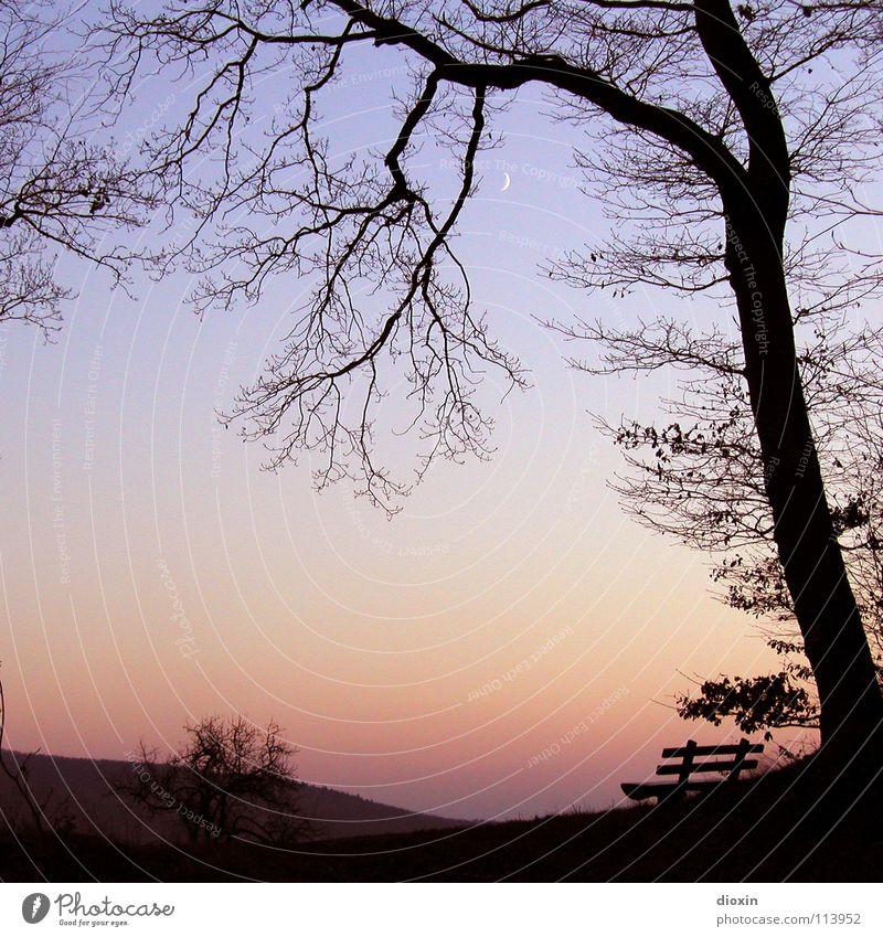 Silent Place Himmel Baum blau Winter Ferien & Urlaub & Reisen ruhig schwarz Einsamkeit Ferne kalt Erholung Herbst Traurigkeit Denken Zufriedenheit orange