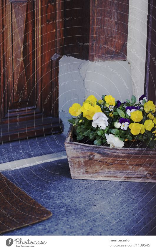 spießig | hauseingang im schwäbischen Natur alt Pflanze Umwelt Wand Frühling natürlich Mauer Holz grau Stein braun Dekoration & Verzierung trist Tür authentisch