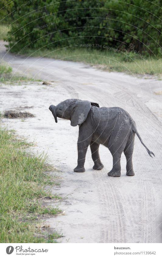 ich hab sooo nen langen. Ferien & Urlaub & Reisen Tourismus Ausflug Abenteuer Sightseeing Safari Expedition Umwelt Natur Landschaft Erde Sand Sträucher Chobe