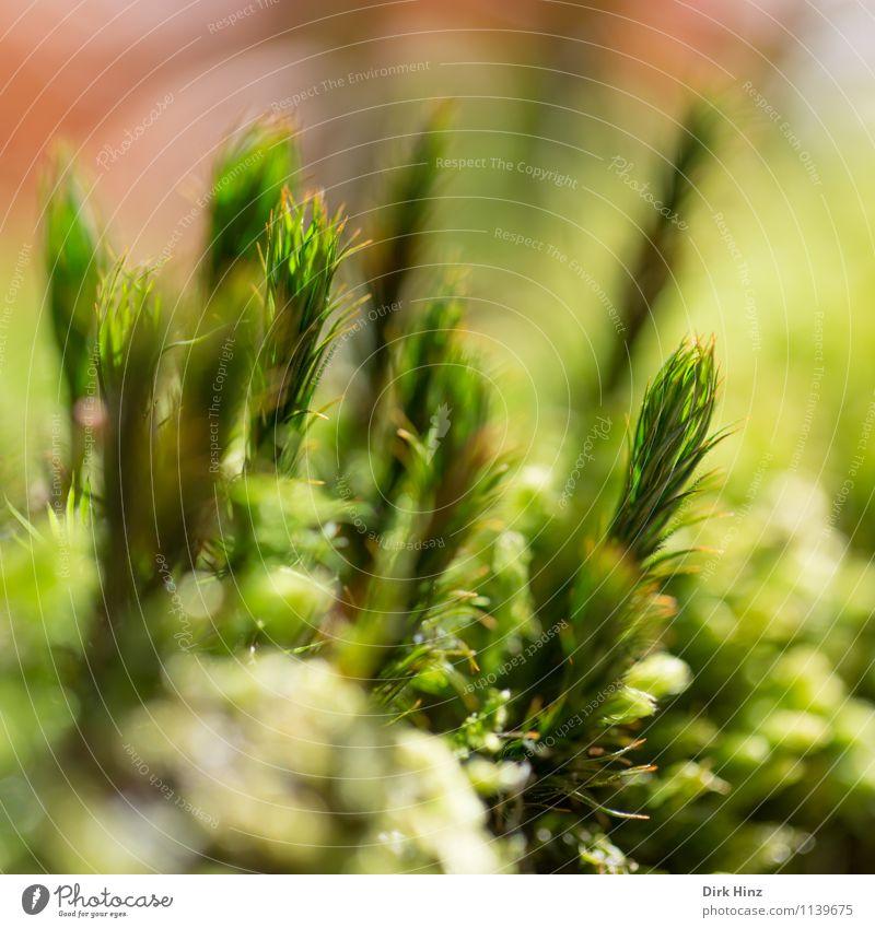 Waldboden II Umwelt Natur grün Grünpflanze Teppich Moos Moosteppich Nahaufnahme weich frisch ruhig klein Erde mystisch filigran unberührt feucht Feuchtgebiete