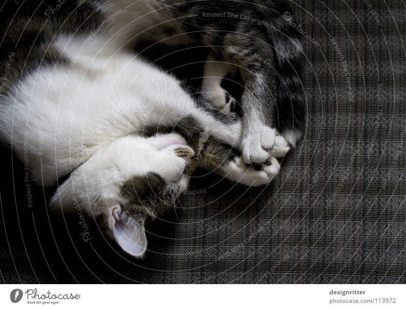 Tagtraum ruhig Erholung Katze Wärme Graffiti Wohnung schlafen Physik Sofa gemütlich Säugetier Sessel bequem ruhen Mittagsschlaf