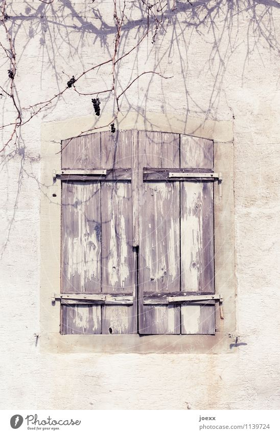 Abschied alt schön weiß ruhig Fenster Wand Mauer Holz Stein braun Häusliches Leben Vergänglichkeit Wandel & Veränderung Schutz Trauer Interesse