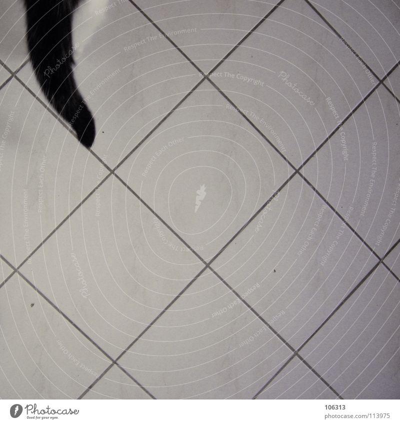 SOVIEL ZUM NIKOLAUS Katze weiß Tier schwarz Haare & Frisuren Wege & Pfade Metall gehen laufen Gesäß Küche Fell Hinterteil Ende Fliesen u. Kacheln Jagd