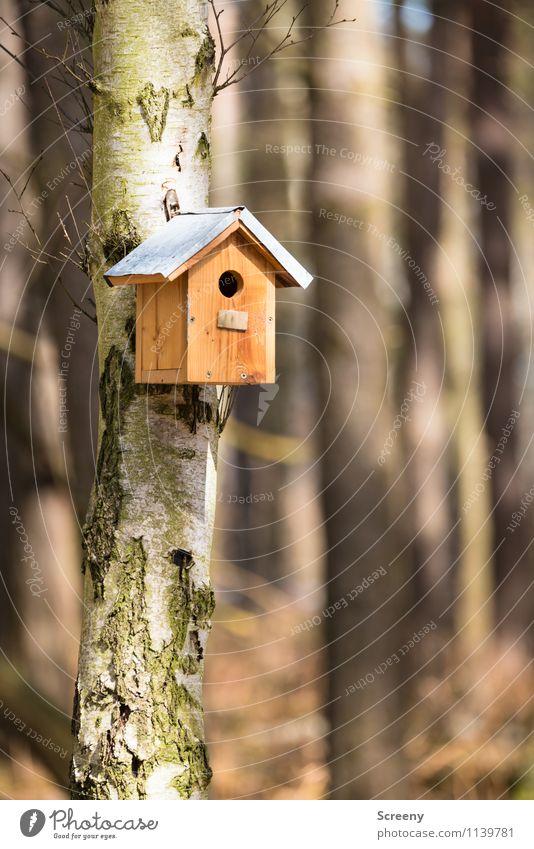 Zu vermieten, beste Lage... Natur Baum Landschaft Wald klein Häusliches Leben Lebensfreude Schutz Sicherheit hängen Fürsorge Geborgenheit Birke Tierliebe
