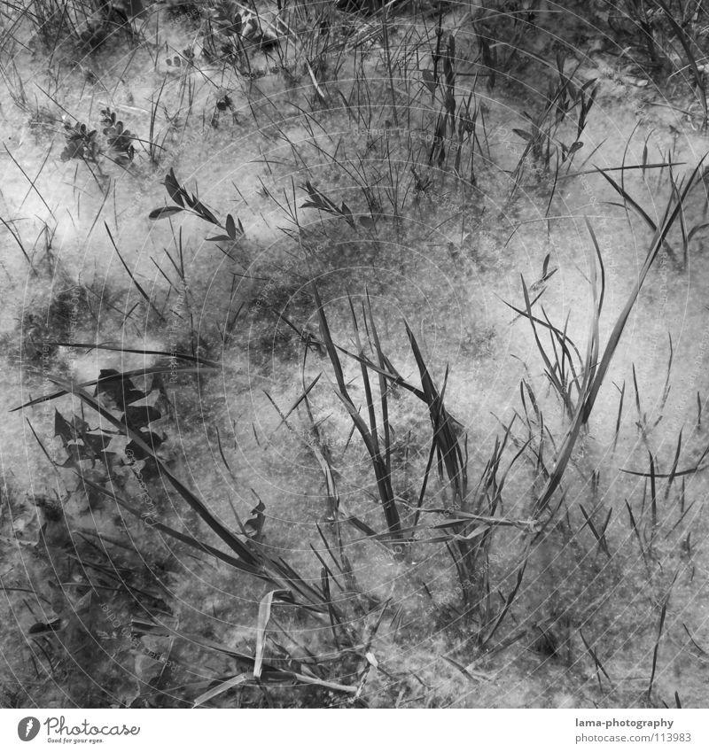 ...weißes... Baum Meer Blume Blatt Winter Wolken schwarz Wiese Gras Wege & Pfade Linie Raum Feld Nebel Platz