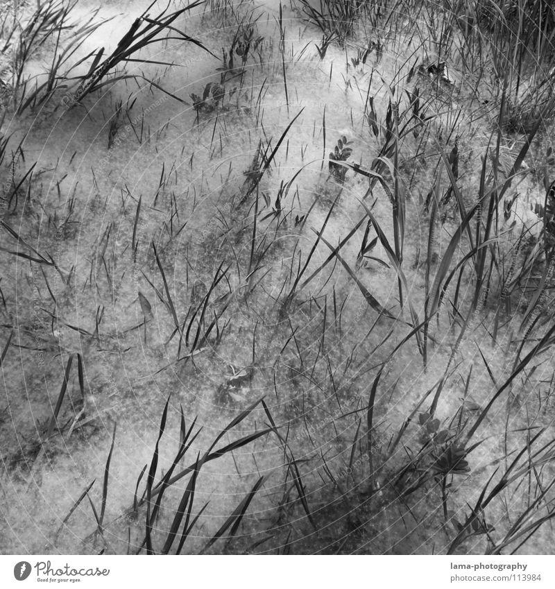 Flauschiges... chaotisch durcheinander unordentlich Winter Pulverschnee Nebel Bodennebel Löwenzahn Wiese Feld Watte herausragen Blatt Halm Gras Blume Sträucher