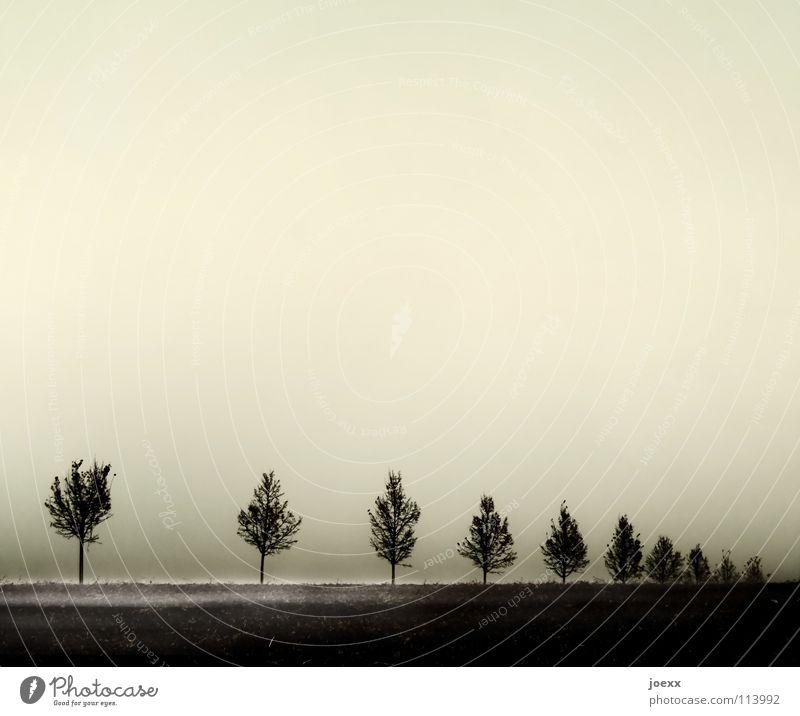 Lücke Baum Baumreihe Bodennebel Nebel ruhig Trauer Verzweiflung Herbst trist gleichförmig konform Reihe Traurigkeit Übergang
