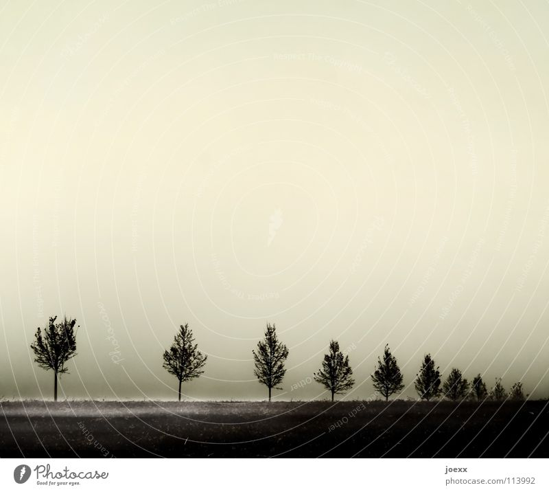 Lücke Baum ruhig Herbst Traurigkeit Nebel Trauer trist Reihe Verzweiflung Übergang Baumreihe Bodennebel