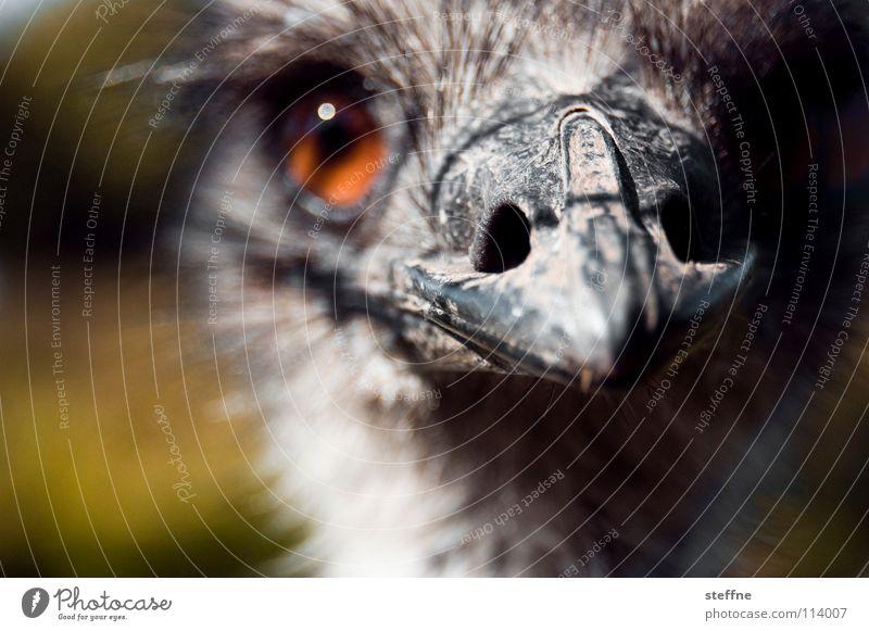Da kiekste wa?! Auge Ernährung Vogel süß gefährlich Afrika Vertrauen Wildtier niedlich lecker Blumenstrauß dumm Australien Schnabel Tier Angriff