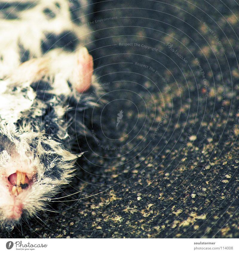 Mal wieder totes Tier gefunden! Auge Tod Leben Haare & Frisuren klein nass Ernährung niedlich Vergänglichkeit Ohr Fell Maus Pfote Säugetier Ekel