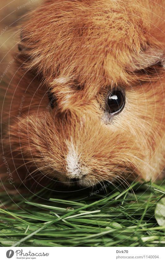 Struwwelkopf Natur schön grün weiß Tier schwarz Wärme Auge Gras natürlich Garten braun glänzend niedlich weich Freundlichkeit
