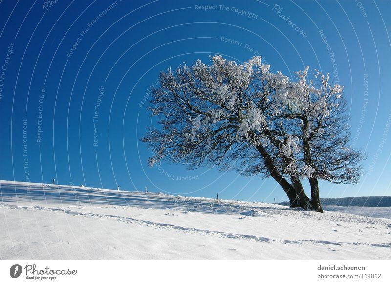 Weihnachtskarte 19 Himmel Natur blau weiß Baum Ferien & Urlaub & Reisen Winter Einsamkeit kalt Schnee Berge u. Gebirge Horizont Deutschland Wetter