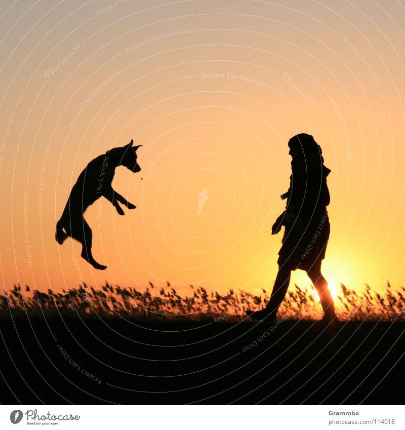wenn's Hunde regnet Frau Himmel Sonne rot Freude springen Gras Hund fliegen Luftverkehr Sonnenuntergang Mensch Abenddämmerung Hundefutter