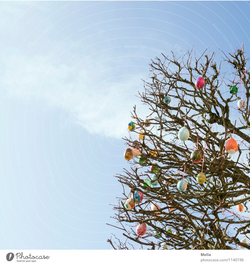 Frohe Ostern! Umwelt Natur Himmel Frühling Pflanze Baum Ast Dekoration & Verzierung Kitsch Krimskrams Ei Osterei Zeichen hängen hoch klein oben blau mehrfarbig