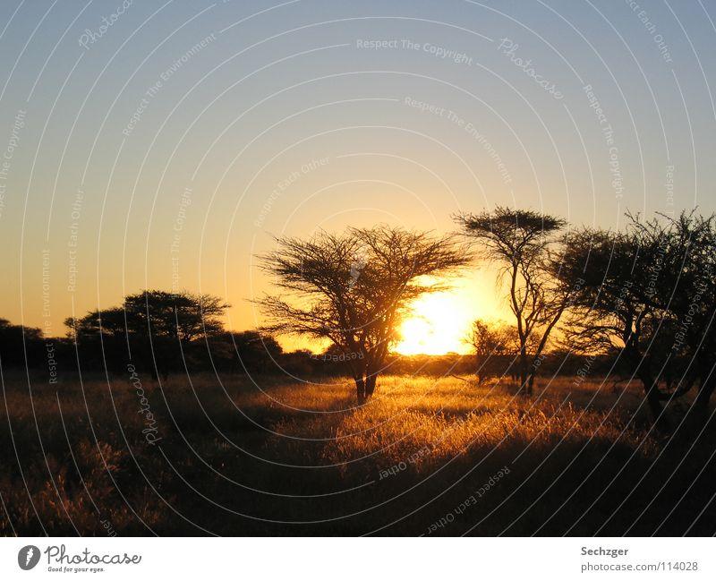 Sonnenuntergang in Namibia Savanne Baum Ferien & Urlaub & Reisen Steppe Afrika Safari Romantik